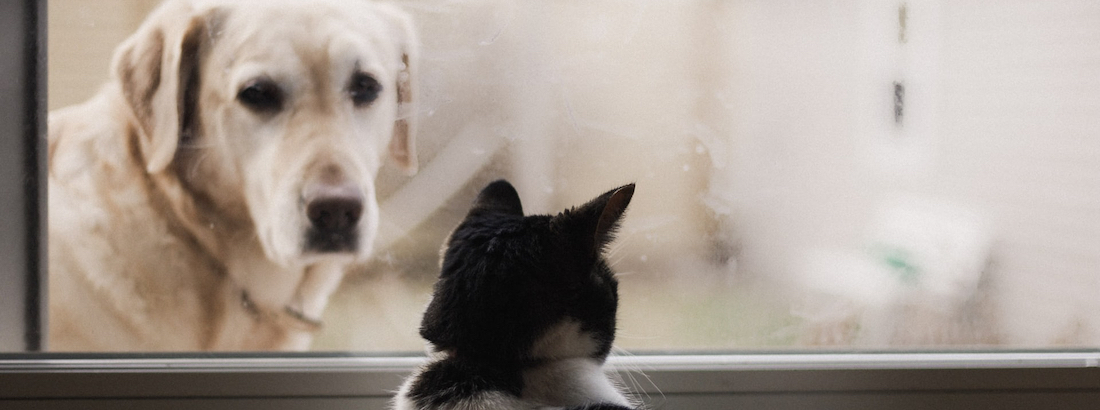 Dog sitting outside looking at cat sitting inside